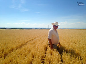 CEO Gary Iverson in a field of oats