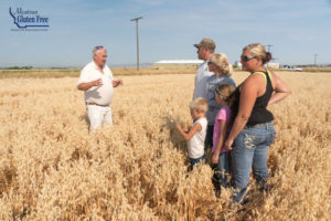 Montana Gluten Free Farmers in a field of oats discussing gluten free oat purity protocol